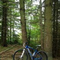 Gisburn Forest bike trails.